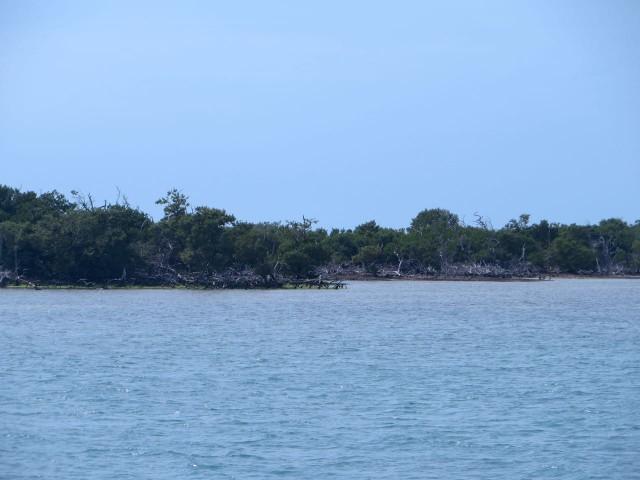 15 Mangrove CAy