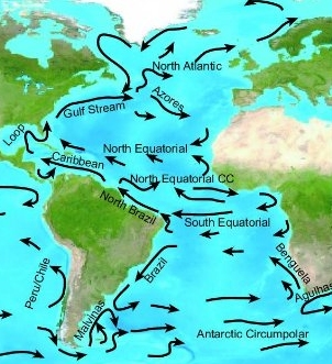 Looking at this graphic of the ocean currents impresses one with just how far the seeds and beans drift.