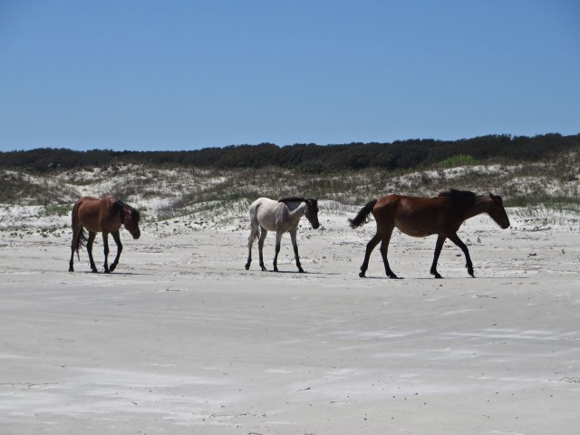 Three horses roaming the along the beach.