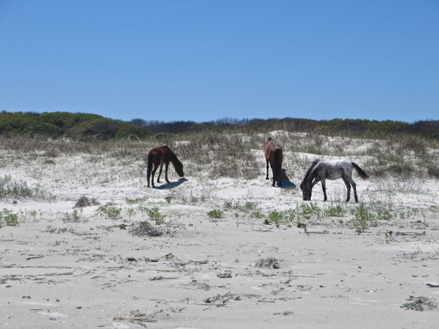 A different trio of horses munch on beach grasses farther down the shoreline.