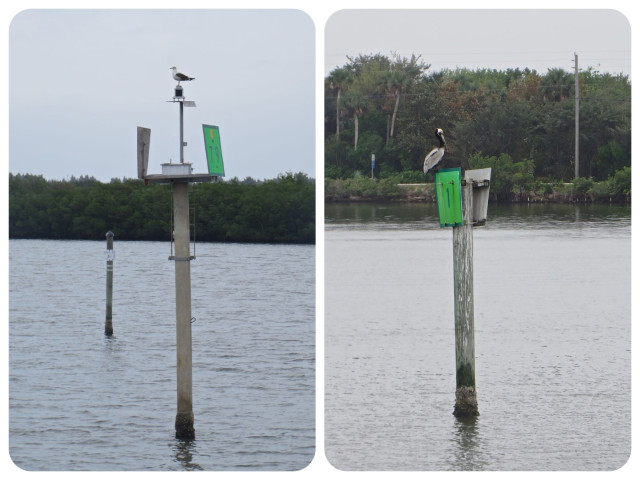 Sea Gull & Pelican green marker
