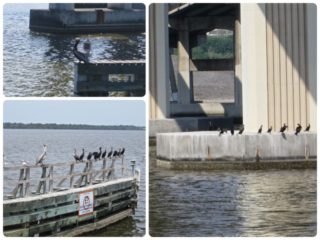 Birds on bridges.
