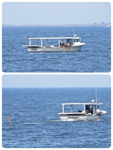 It wouldn't be the Chesapeake Bay without the crab skiffs out and about taking care of their pots.