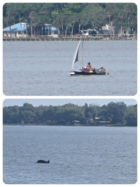 We are seeing lots of dolphins every day, but rarely get a good photo of them. This was an unusual little boat -- sailing canoe with a large load.