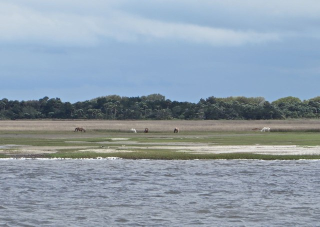 Our first sight of Cumberland Island's wild horses.