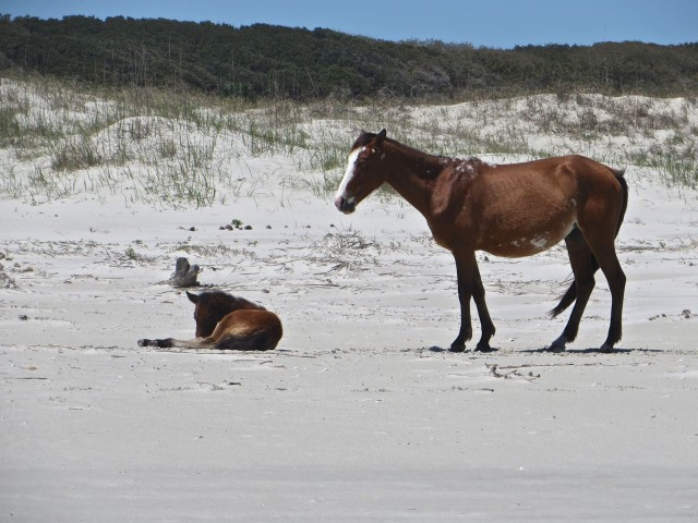 A mare and her foal. We had some concerns that the foal was not well.