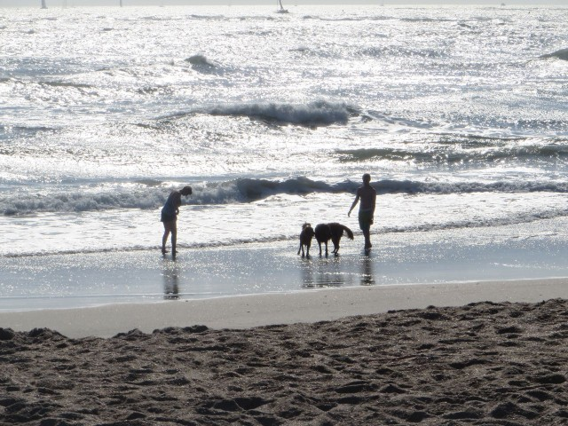 People and dogs enjoying Villano Beach in the early morning.