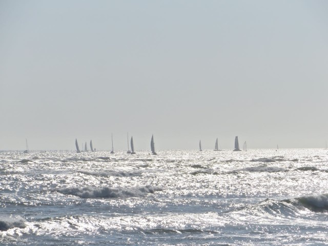 Sailboats competing in Race Week in St. Augustine. We could see them from the beach.