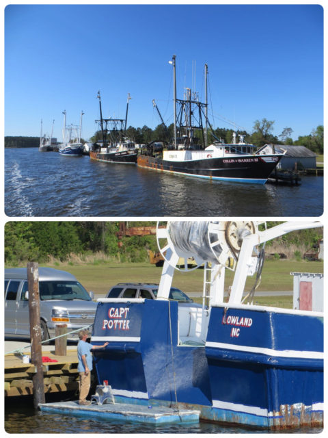 "The big fishing boats at RE Mayo. ""Cape Potter"" is getting his named re-painted."