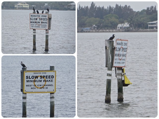Every slow speed board had at least one bird resting on it.