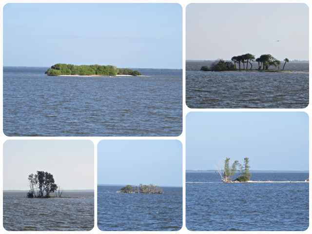 Many spoil islands line the ICW, the by-product of dredging the ICW.