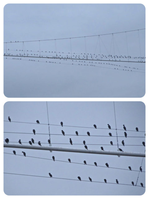 "The odd looking specks on the high wires become birds as we slip below. Brings to mind, ""Bird on the Wire by Leonard Cohen, 1969."