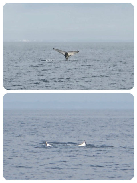Two still shots of the whale's tail.